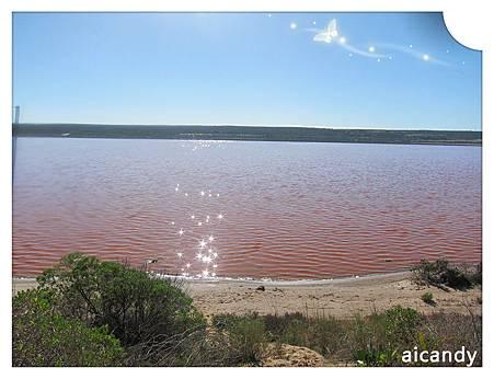 KALBARRI 粉紅湖1
