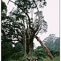 塔關山-要長的跟大樹一樣喲.jpg