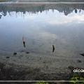 加羅湖-霧氣散氣的湖畔3.jpg
