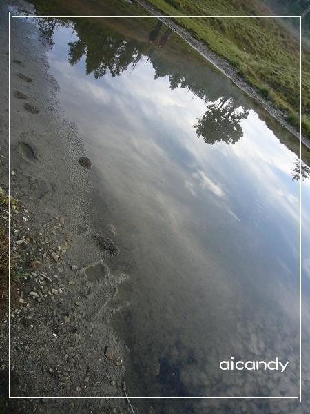 加羅湖-水中倒影8.jpg