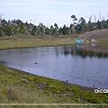 加羅湖-水中倒影18.jpg