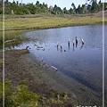 加羅湖-水中倒影19.jpg