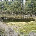 加羅湖-快到正湖的另一個湖.jpg