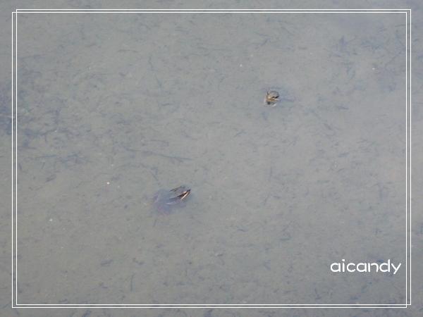 加羅湖-夜晚美麗合奏曲的主角2.jpg