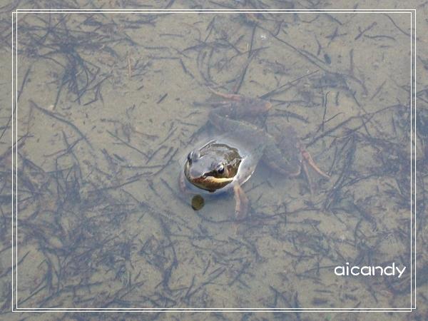 加羅湖-夜晚美麗合奏曲的主角3.jpg
