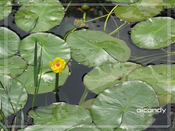 池中一景.jpg