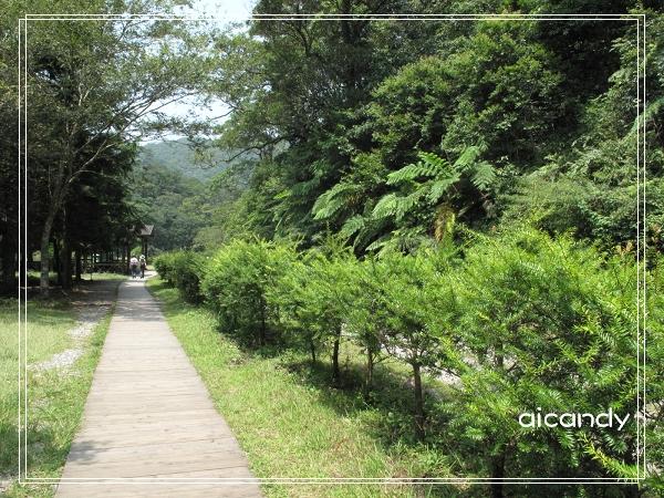 往福山植物園的小徑.jpg
