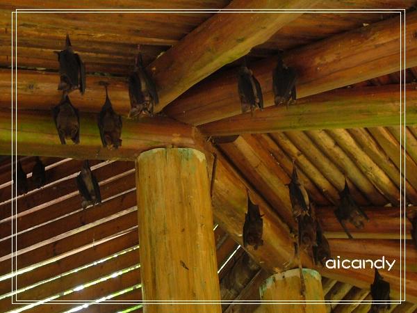 林下亭的蝙蝠.jpg