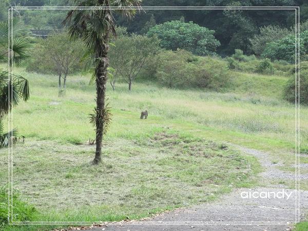 遠方的猴子.jpg