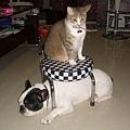 minaco與傑西