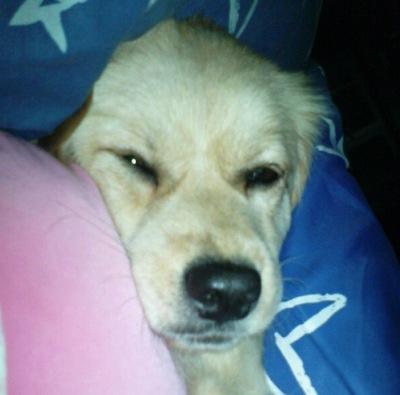 mico最爱睡枕头了