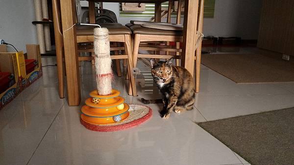 04簡單的麻繩貓抓兼具水平與垂直抓抓需求