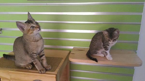 05用貓樹貓跳台或是家具來創造幾個制高點