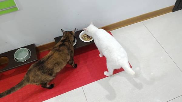 10溼食可以增加貓的水分攝取,但請務必做功課給予均衡營養