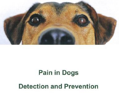 pain in dogs detection and prevention-00.JPG