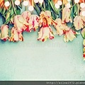 beautiful-tulips-floral-border-bokeh-blue-vintage-background-top-view-place-text-parrot-82219863.jpg