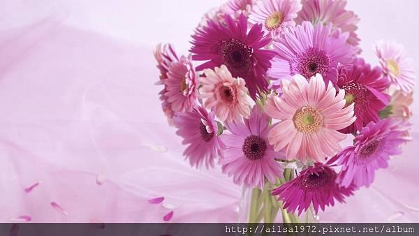 pink-sunflower-scenery.jpg