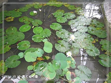 嘉大植物園 (10).jpg