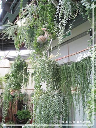 嘉大植物園 (3).jpg