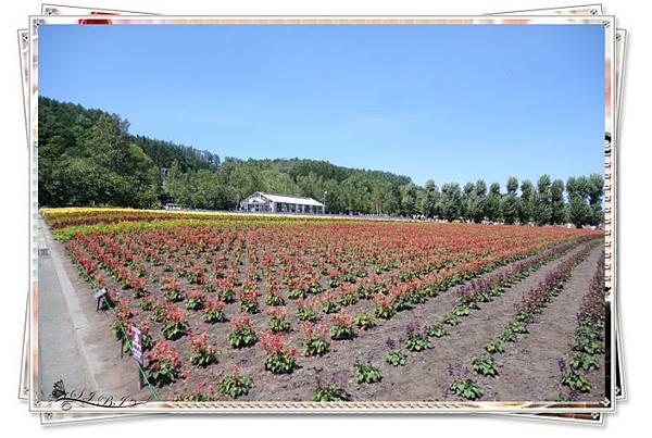 富田農場 (2).jpg