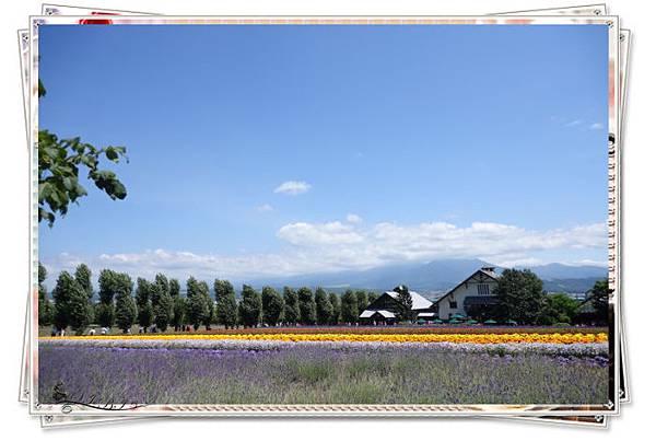 富田農場 (1).jpg