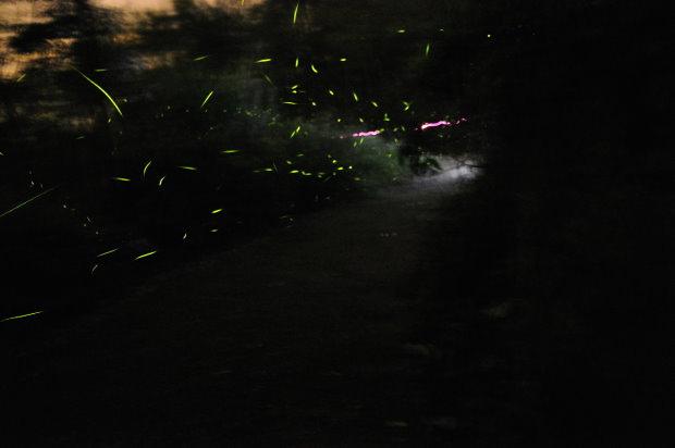 賞螢趣--梅嶺螢火蟲季