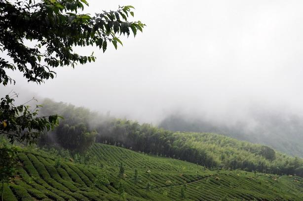 霧中行旅--竹林深處