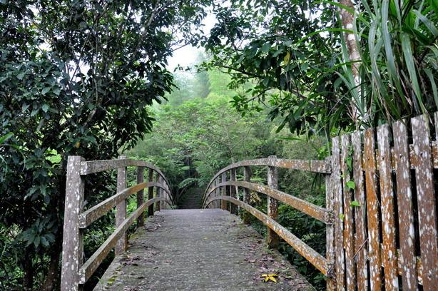 勇闖竹林深處--挑戰出水坑步道