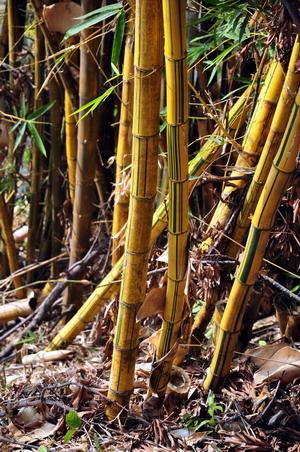 竹崎公園步道景觀—走尋消失的木屐寮