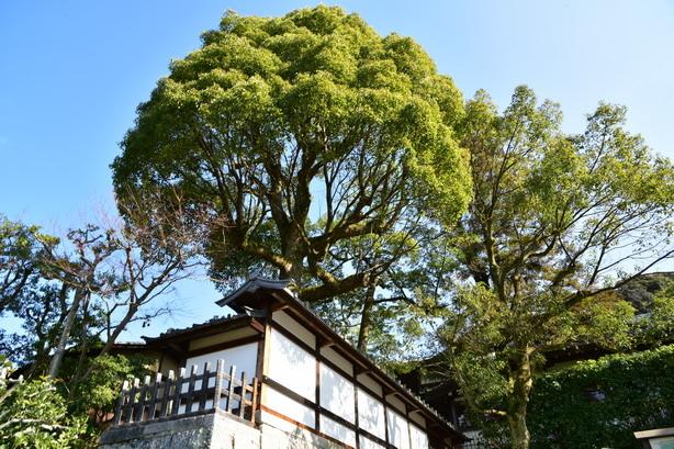 日本京都自由行—高台寺、大谷祖廟、長樂寺巡禮