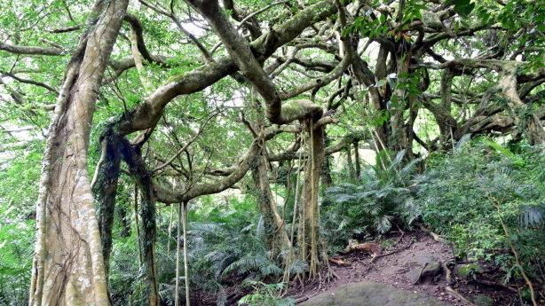 再尋記憶中的鹿野—住妙善寺訪龍田村探阿凡達森林