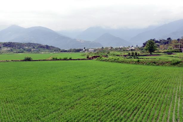 池上富里健步走—走武陵樟樹道、攬花東稻香平原、尋羅山瀑布