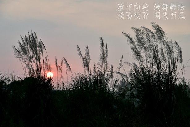 DSC_3998a