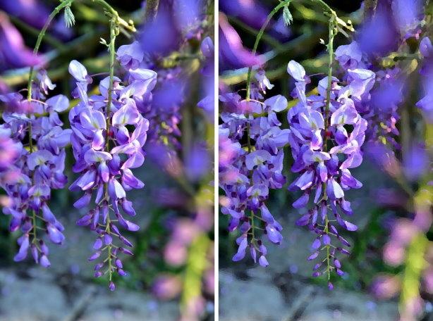 紫藤合 11.jpg