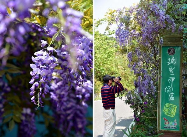 紫藤合 2.jpg