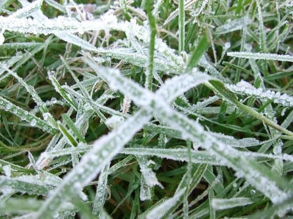住家草皮結霜