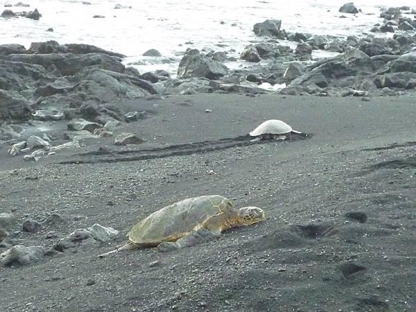 D05-161-Black Sand Beach.JPG