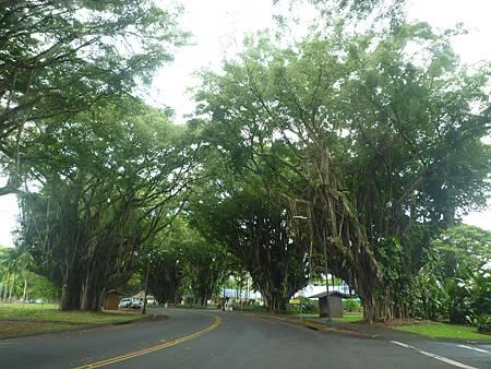 D06-043-Banyan Drive.JPG