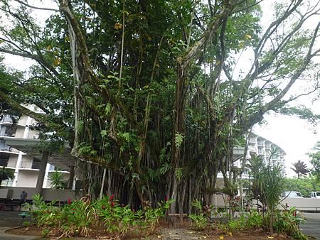 D06-044-Banyan Drive.JPG