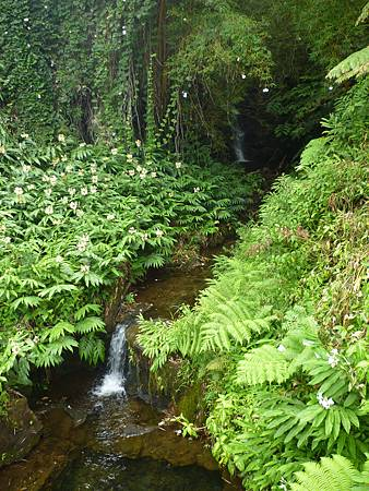 D06-125-Akaka Falls.JPG