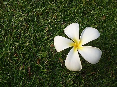D08-058-Hilton Hawaiian Village.JPG
