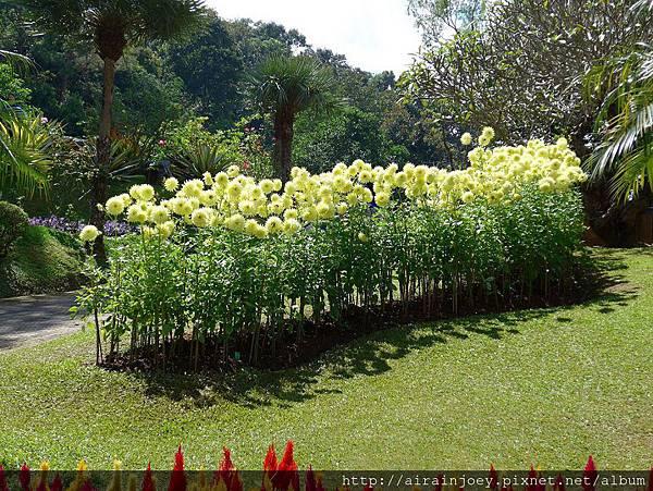 D07-241-Mae Fah Luang Gardens.jpg