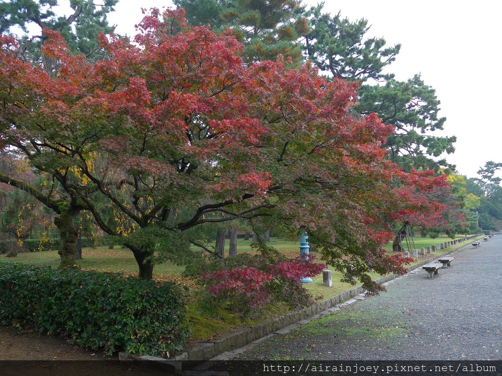 D02-025-京都御苑.jpg