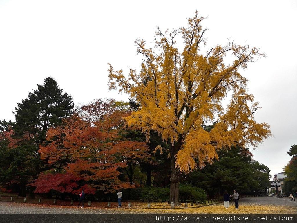 D02-029-京都御苑.jpg