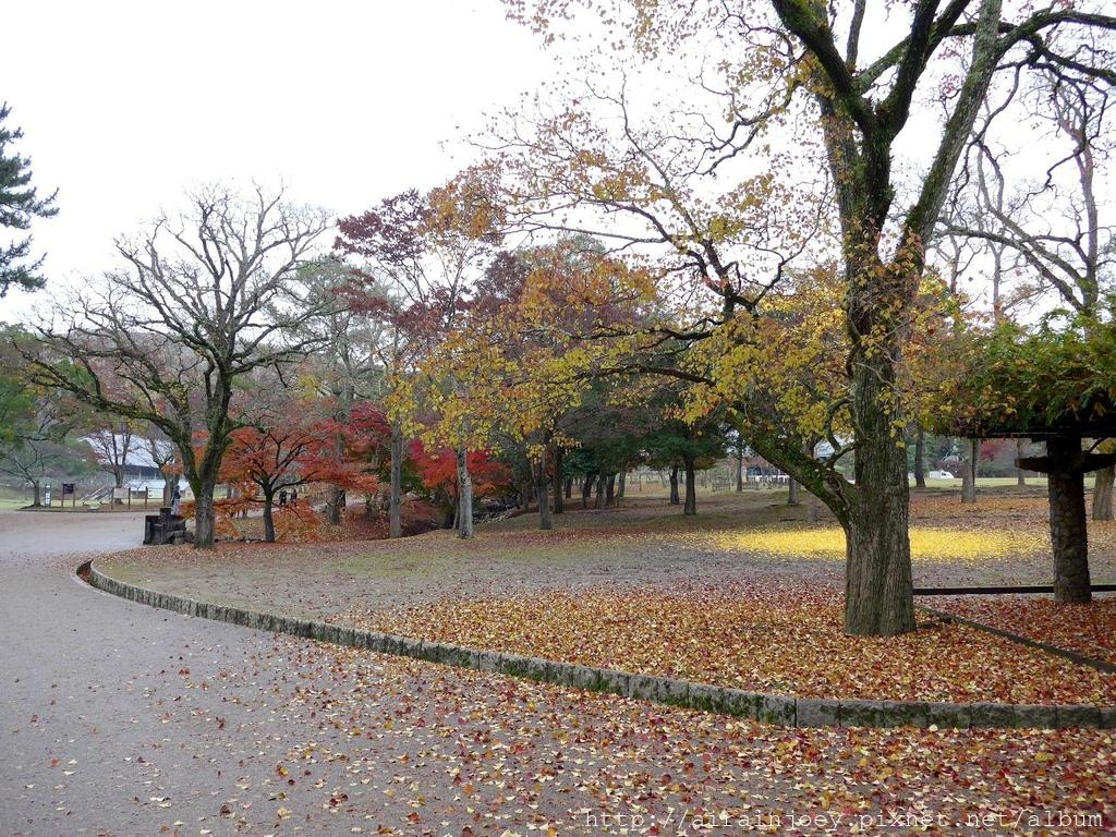 D03-034-奈良公園.jpg
