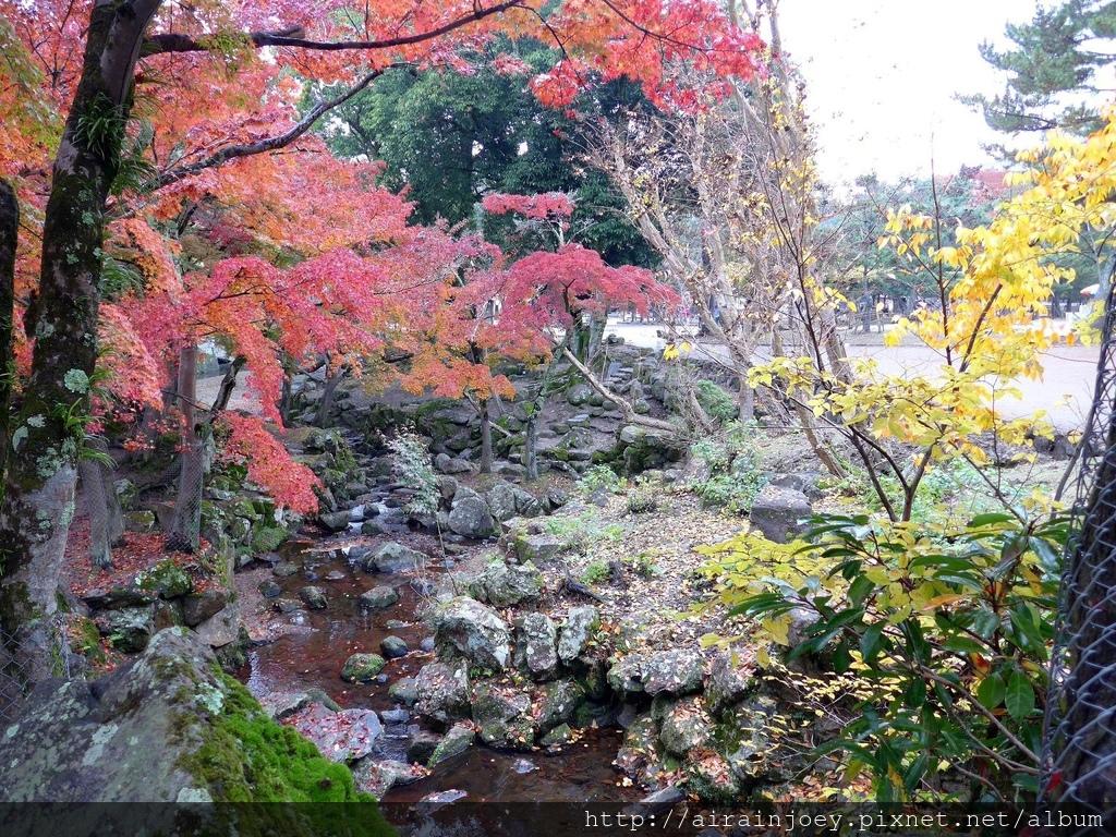 D03-040-奈良公園.jpg