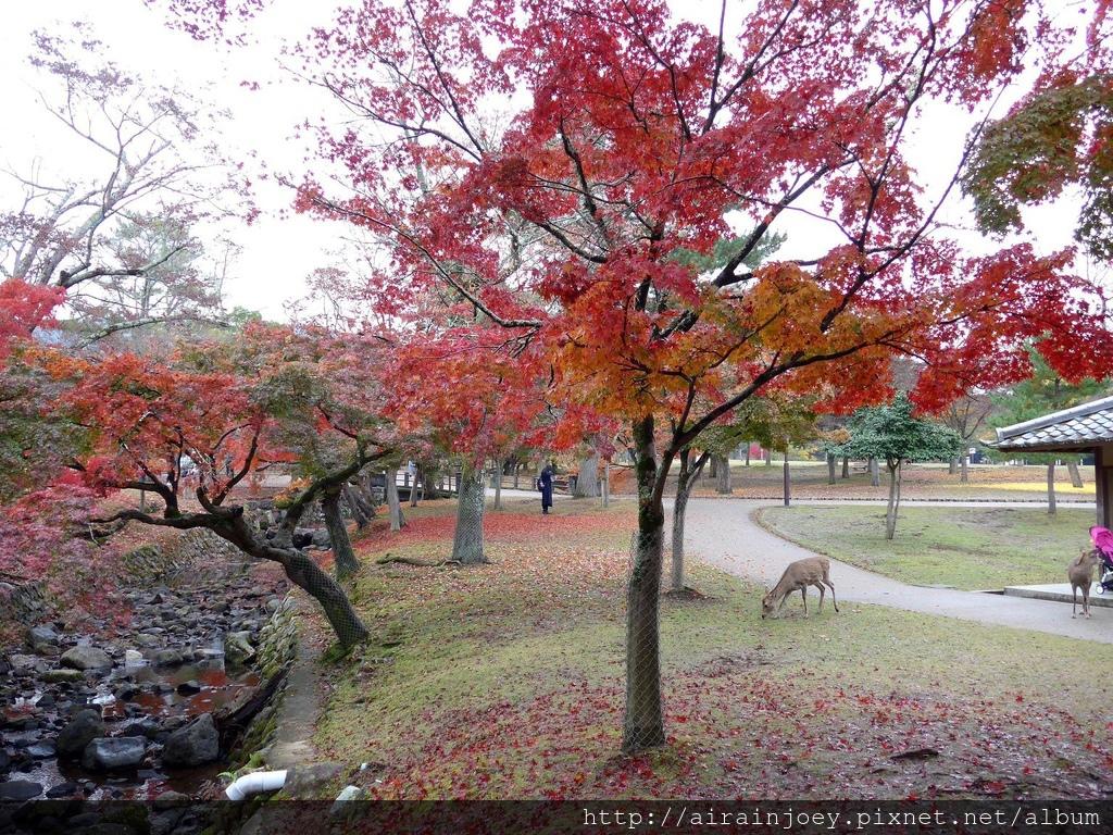 D03-042-奈良公園.jpg