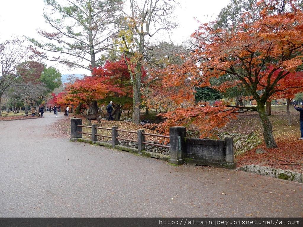 D03-050-奈良公園.jpg