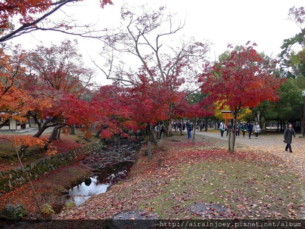 D03-057-奈良公園.jpg