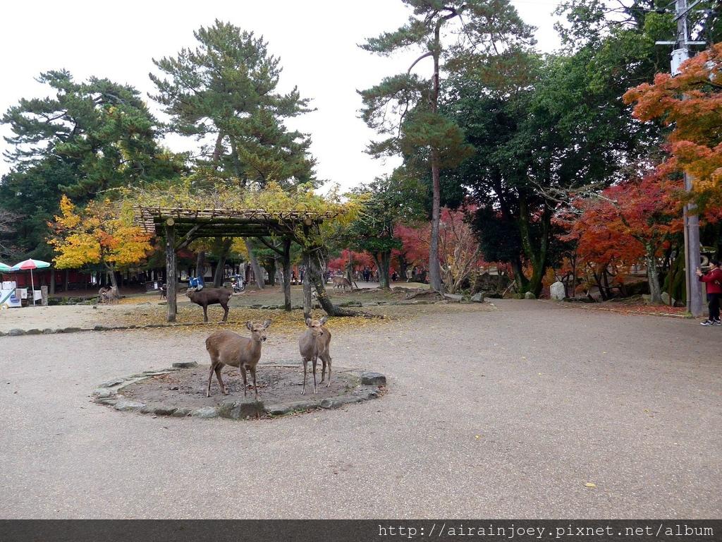 D03-060-奈良公園.jpg